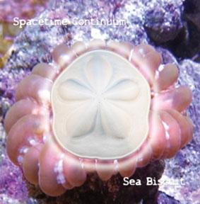 Sea Biscuit CD