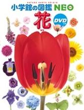 小学館の図鑑NEO 花 DVDつき [BOOK+DVD] Book