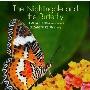 夜鳴きうぐいすと蝶々〜リコーダーのための作品集