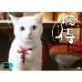 ドラマ「猫侍 SEASON2」DVD-BOX