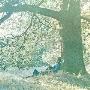 ヨーコの心/プラスティック・オノ・バンド