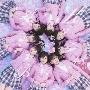 桜の木になろう (Type-A) [CD+DVD]<通常盤>