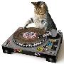 ターンテーブル型 爪とぎ Cat Scratch Turntable [2054311090036]