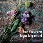 for Flowers<タワーレコード限定>