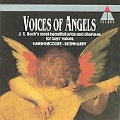 Voices of Angels / Harnoncourt, Leonhardt