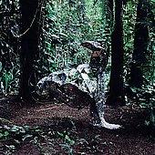 Donkey (US)