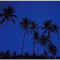 海の月光浴